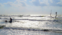 IMG_0649.1 (mikehogan2) Tags: padreisland nationalseashore texas family pelicans