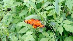 Cores da natureza.#flores #flowers #borboletas #naturalbeauty #natureza #naturephotography #jardim #floreslindas #revistaxapury #eunotg #criacaodedeus #obradivina #instaflowers #instaflores #motox2 #instamotox2 #garden #floricultura #intagram #instalike # (ederrabello2014) Tags: naturalbeauty naturephotography instalike flores jardim butterflys motox2 intagrambrasil garden flowersbouquet revistaxapury borboletas flowerslovers instaflores eunotg floricultura instamotox2 flowerstagram natureza floreslindas instaflowers criacaodedeus intagram obradivina flowersofinstagram flowers