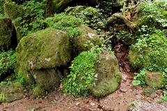 Triberg (asecchi) Tags: triberg blackforest forest landscape