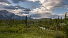 "Don't look for New Landscapes use new eyes to see - what is- Already There "" (Josiane .) Tags: nikon nature nationalpark d750 outdoor canada jaspernationalpark spring mountains rockymountain river trees pine landscape clouds albertarockymountain alberta"