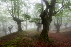 1ST FOGGY DAY (Jesus Bravo) Tags: beech forest park natural gorbea gorbeia basque country euskadi bizkaia bosque niebla fog foggy