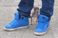 Meet Scrappy (deu49097) Tags: dog