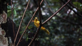 Bird Animal Themes Animals In The Wild One Animal Animal Wildlife Tree Perching Focus On Foreground Branch Day No People Nature Outdoors Beauty In Nature