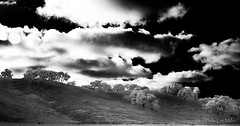 Cloudland (philipleemiller) Tags: landscape nature trees clouds infrared carmelvalley california rollinghills d70s