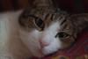 Micio (VikingAle) Tags: cat gatto funnycat funny sleepingbeauty sleepingcat brown browncat