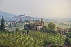 Langhe (gianmarco giudici) Tags: gianmarcogiudici langhe barolo italy panorama nopeople vitigni nikond600