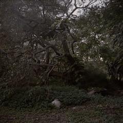 Currumbin (J.K.Stevens) Tags: mamiya c220 kodak portra 160 square 6x6 tlr twinlensreflex currumbin valley god mist fog morning sunrise film 120mm mediumformat canoscan 9000f mark ii gold coast queensland australia
