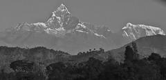 """NEPAL, Himalaya - Annapurna-Massiv  (z.T. mit Machapuchare """" Fischschwanz"""" ,  von Pokhara aus gesehen, (serie) 16182/8482 (roba66) Tags: annapurna annapurnamassiv himalaya himalayagebirge gebirge reisen travel explore voyages roba66 visit urlaub nepal asien asia südasien pokhara landschaft landscape paisaje nature natur naturalezza mountain berge range mountains montana felsen rock rocks gletscher eis ice berg fischschwanz fishtail machapuchare blackwhite bw sw branco negro blackandwhite blancoenero blancoynegro monochrome byn bretoebranco e"""