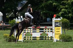 A9904299_s (AndiP66) Tags: springen langenthal bern 2017 juni june 3juni2017 pferd horse schweiz switzerland kantonbern cantonofbern concours wettbewerb horsejumping springreiten pferdespringen equestrian sports pferdesport sport martinameyer grueb mauensee luzern nevada sony alpha sonyalpha 99markii 99ii 99m2 a99ii ilca99m2 slta99ii sony70400mm f456 sony70400mmf456gssmii sal70400g2 amount andreaspeters pfingstspringen