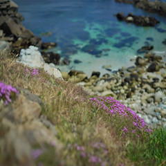 Bay Waters (Steven Hight) Tags: sonya7s canon85mmf12 bokehpanorama echium pacificgrove