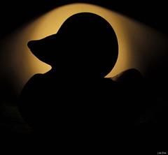 Little Rubber Duck Silhouette (Lisa Zins) Tags: lisazins macro macromonday macromondays monday silhouette joshua rubber duck toy cattoy shape canon powershot sx150 black june5 2017 monochrome inexplore explored