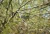 Este bonito pájaro es un loro del Quaker, también conocido como cotorra monje o cotorra argentina. Su nombre científico es Myiopditta monachus. A mi me encantan aunque se va diciendo que son una plaga y creo que por algunos sitios las matan a miles. #enri (EMferrer) Tags: cotorra loroquaker ave cotorraargentina enriquemalaga cotorramonje pajaro