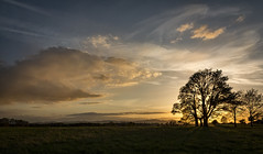 Backlit - Explore 080617 (cliveg004) Tags: backlit silhouette croomepark croome worcestershire malvernhills tree trees rural nationaltrust countryside clouds sunset sky nikon d5200 1685mm