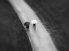 Yin Yang (Helena Normark) Tags: umbrellas rain mood monochrome bw trondheim sørtrøndelag norway norge sonyalpha7 a7 lensbaby seeinanewway sweet50 lensbabysweet50