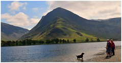 Fetch !! (A tramp in the hills) Tags: buttermer lakedistrict cumbria dog labrador fleetwithpike