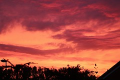 Sunset and Silhouettes (Eddie Crutchley) Tags: europe england cheshire nature beauty sunset silhouette simplysuperb