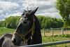 Friendly Horse (matthewjpollard) Tags: horse badfocus swabian farm 50mm minolta a6000