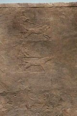 May 10: 84 Lion Hunt Reliefs (Aquafortis) Tags: art london england museums assyrian