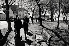 A Walk in the Park … (Poul_Werner) Tags: danmark denmark skagen easter p tree tr northdenmarkregion pœske tr¾ dk påske træ
