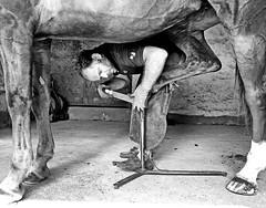 mon ami Thomas Morret, maréchal-ferrant @tomwhc #marechalferrant #blacksmith #cheval #horse #portrait #craftman #metier #thomasmorret #woodyhorse (Ben Heine) Tags: benheinephotography photography composition light smartphone nature landscape beauty beautiful photo photographie art ifttt instagram benheine horizon benheineart