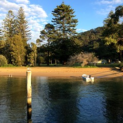 A bird with hair on a pole. The Basin. Pittwater.