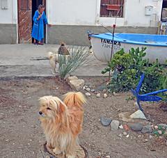 escenas de la vida. Las Negras. (Luis Mª) Tags: almería lasnegras escenasdelavida perros animales mujer afiiae