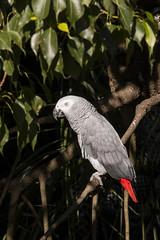 9 (Gabriel Fila) Tags: temaiken zoo zoológico parque temático animales