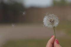 Wishes of Summer (Jorgepevet) Tags: wish dandelion dientedeleon ella sonia fingers flower
