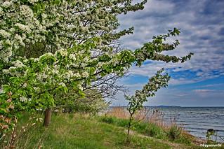 Frühling ist der Neuanfang der Natur