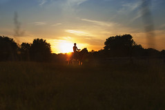 IMG_3617 (Mary Anne Morgan) Tags: horses silhouette