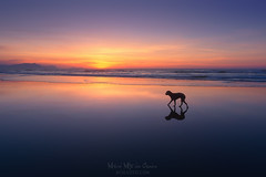 Perro en la playa (Mimadeo) Tags: beach dog walking sunset nature sea pet animal sand ocean water summer silhouette outdoor sky sunrise sunlight beautiful idyllic dreamy reflection reflections