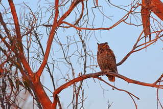 Just an Owl perched on a branch