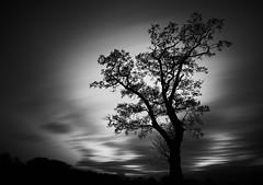 Tree under clouds #longexposure #blackandwhite #tree #clouds #10stopfilter #landscape (skinp) Tags: longexposure blackandwhite tree clouds 10stopfilter landscape