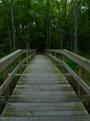 Boardwalk trail (Dendroica cerulea) Tags: boardwalk bridge trail path forest wetlands spring polefarm mercermeadows lawrencetownship mercercounty nj newjersey