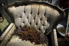 Growth Chair (CarusoPhoto) Tags: john caruso carusophoto iphone 7 plus illinois rural banal mundane everyday ordinary chair plant