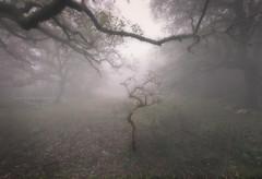 - Demasiada irrealidad - (Mar Diaz -korama-) Tags: roja bosque mist fog tree ambiente luz light parquedelosalcornocales cadiz mardiazkorama