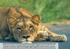 _DJA3677 copy (naturephotographywildlife) Tags: kruger wildlife scenery animals birdlife a99ii africa park