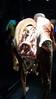 Tras 04738 (Omar Omar) Tags: losangeles losángeles losangelesca losángelescalifornia la california californie usa usofa etatsunis usono californiasciencecenter museum musée muzeo museo sciencemuseum museodeciencias bodyworlds bodywoks cuerpohumano horror creepy preservedhumanbodies skinnedhumans plastination plastinación kadavro cadaver cadavre cadáver