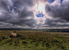 gower (amazingstoker) Tags: gower wales glamorgan west pony grass landscape cloud sky cow wild graze north vapour trail con common land horse cymru swansea fairwood skyscape aeroplane road