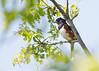 _53F7163 Eastern Towhee (~ Michaela Sagatova ~) Tags: birdphotography canonphotography easterntowhee michaelasagatova sparrow