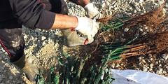 vini-giribaldi-why-barolo-project (sassiitalytours) Tags: wine piemonte castle rodello langhe altalanga vino winetours