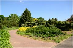 DSC_8855 (facebook.com/DorotaOstrowskaFoto) Tags: ogródbotaniczny kwiaty powsin warszawa