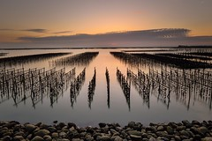 Sunset at Oyster Field (Vincent_Ting) Tags: sunset 夕陽 東石漁港 蚵田 網寮漁港 fishingport gorgeoussky clouds 雲彩 oysterfield reflection 倒影 天空 sky taiwan chaiyi 台灣 嘉義 vincentting sea 海邊 water truss 蚵架