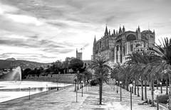 Palma Cathederal B&W (Rob McC) Tags: blackandwhite bw monochrome cathedral church palme majorca mallorca fountain palms palmtrees leadinglines spain espana