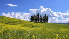 I cipressi più famosi del mondo … (miriam ulivi OFF /ON) Tags: miriamulivi nikond7200 italia toscana sanquiricodorcia boschettodicipressi paesaggio landscape cielo nuvole nature sky clouds 7dwf