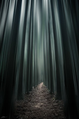 Dreaming Forest (ScottSimPhotography) Tags: forest woods wood path trees tree perspective dreamy dreaming moody drama mood japan japanese asia travel nature green natural soaring tall high dark vanishingpoint roadlesstravelled sony a6000