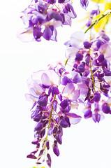 DSC_4524 (Frankie Tseng (法蘭基)) Tags: yms taipei taiwan flower flowers nikon cherryblossoms summer spring 2017 abstract blur bw bwphotography blackwhite yangmingshan 台北 櫻花 陽明山 台灣 抽象