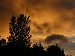 Thursday's Sunset (ukstormchaser (A.k.a The Bug Whisperer)) Tags: sunset uk weather fiery rain mammatus milton keynes tree trees evening june spring crow leaves