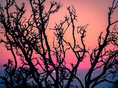 Goodbye Sun (Tassos Giannouris) Tags: sunset sun trees set sky orange blue hour kos greece blur tree