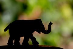 Elephant (Peter Branger) Tags: macromondays macro silhouette elephant strobist canoneos7dmarkii canonef100mmf28lisusm canonex580ii
